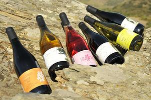 domaine mont-noir, mont-noir, montnoir, vin, côtes du roussillon, roussillon, catalogne, france, vin catalan, vin français