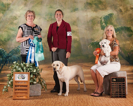 english.labs.Minnesota.breeder.breeders.