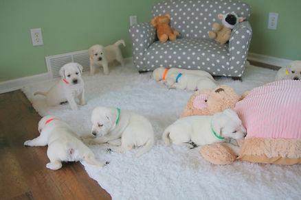 puppy.room.JPG