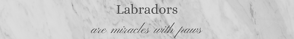 Labradors(1).png