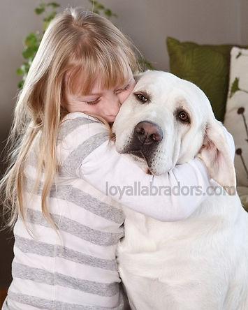 selah.white.labs.puppy.MN.IA.breeder.eng