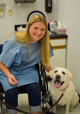 service.and.therapy.dogs.loyal.labradors