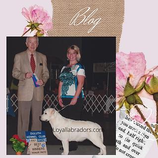 loyal.labradors.blog.white.english.labs.