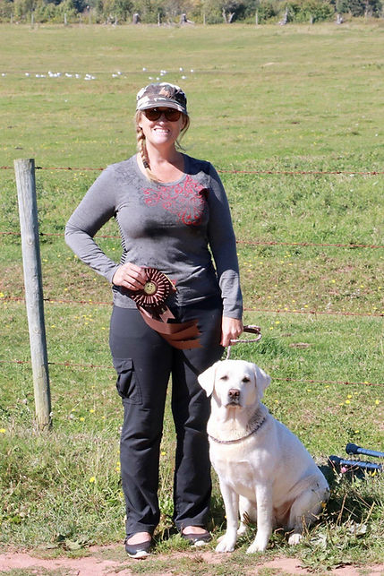 white.lab.hunting.dog.english.labs.mn.mi
