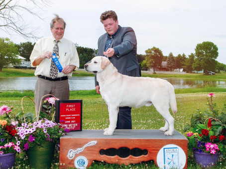 Willie wins 1st place in his group at the AKC Summer Solstice - 2021