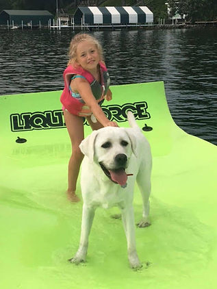 white.lab.surfing.water.sports.dog.labs.