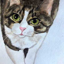 Helen Sachania - Cat