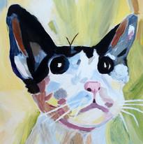 Nicky Buckley - Cat