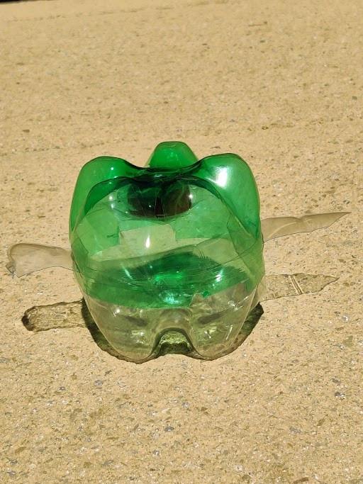 turtle pic 13.jpg