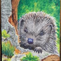David Thomas - Hedgehog - Acrylics On Te