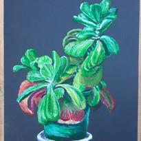 David Thomas - Succulent - Oil Pastel