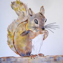 Nicky Buckley - Squirrel