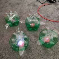 turtle pic lights.jpg