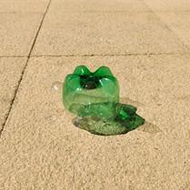 turtle pic 11.jpg