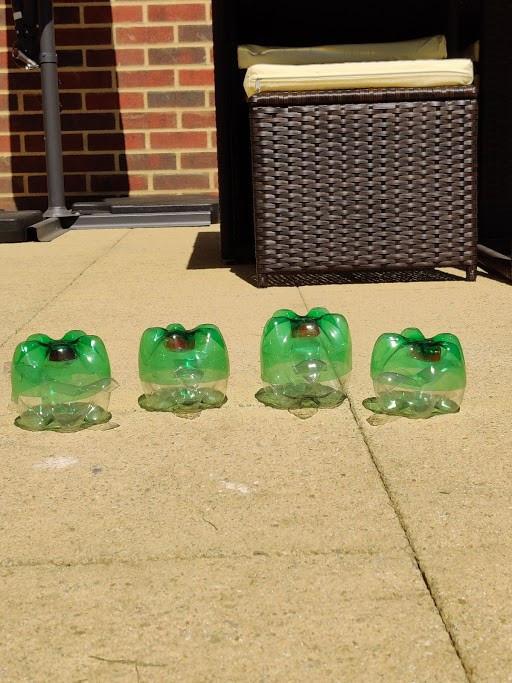 turtle pic 6.jpg