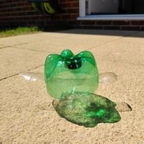 turtle pic 17.jpg