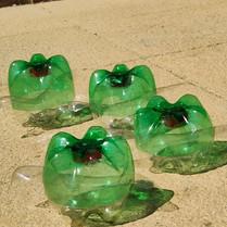 turtle pic 5.jpg
