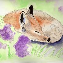 Gill Saunders - Fox