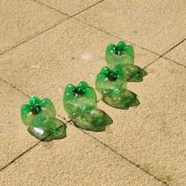 turtle pic 8.jpg