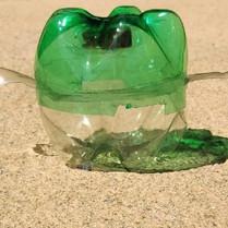 turtle pic 14.jpg