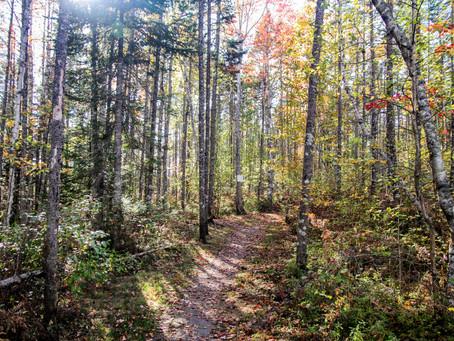 Standing with Nova Scotia-Mi'kma'ki forest protectors