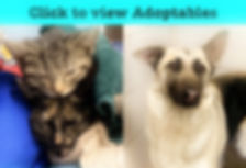 Adoptables (Click to View).jpg