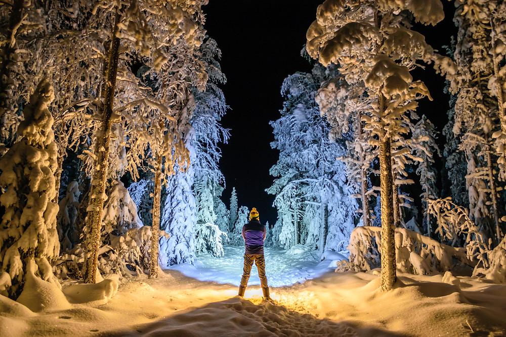 Reverse Backlighting in a Winter Wonderland.