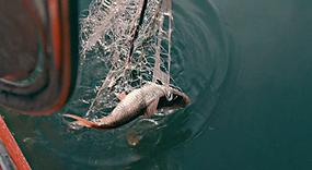 Fischfang Braschler.png