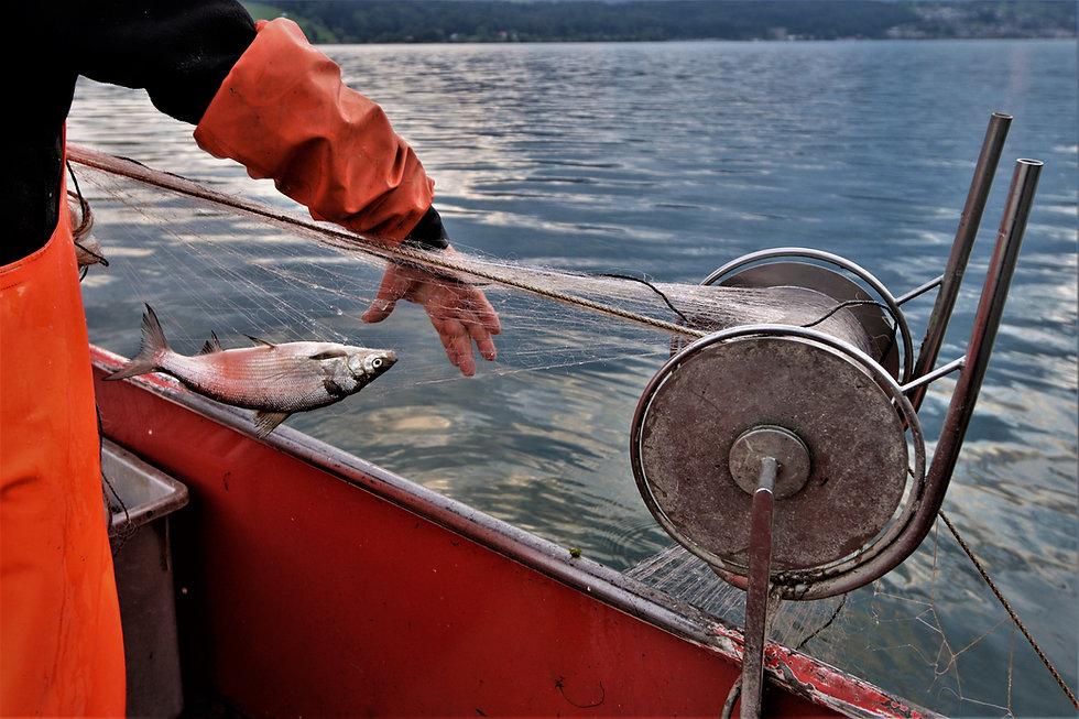 Fischerei Braschler Zürichsee frische Fi