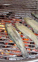 Fischessen Fischerei Braschler Zürichsee