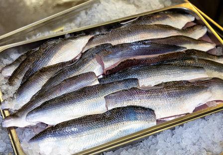 Fangfrische Fische aus dem Zürichsee; Fi