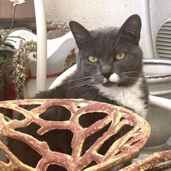 gatto_lamiamaglietta