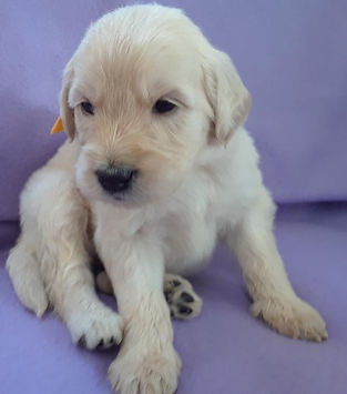 Golda 4 weeks.jpg