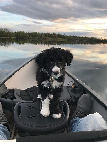 Finnley Truffle in a boat.jpg