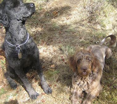 Meet the Parents/Waiting List | Poodles 'N' Doodles 'R' Us