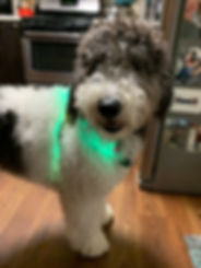 Mojo Glow.jpg