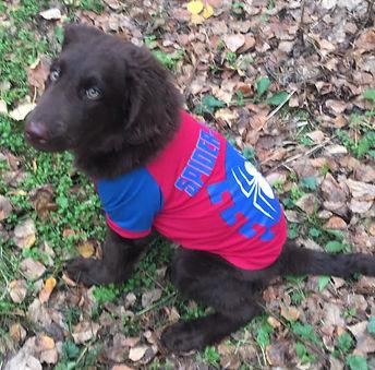 Beaver 4 months 2_edited.jpg