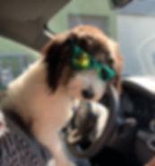 Mojo driving in shades.jpeg