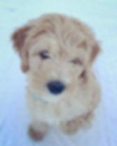 Denali (Sunny in the snow) Kippi's 2nd L