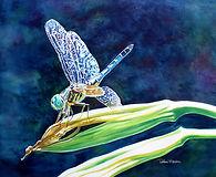 Dragonfly_72dpi_1-21.jpg