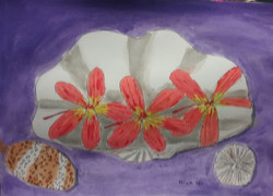 Frangipani_flowers_with_clam_shell,_cowr