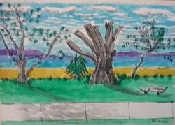 Geoffrey bay dead tree