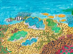 4 Tridacna maxima on a reef