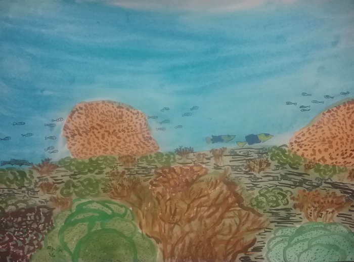Magnetic Island fringing reef