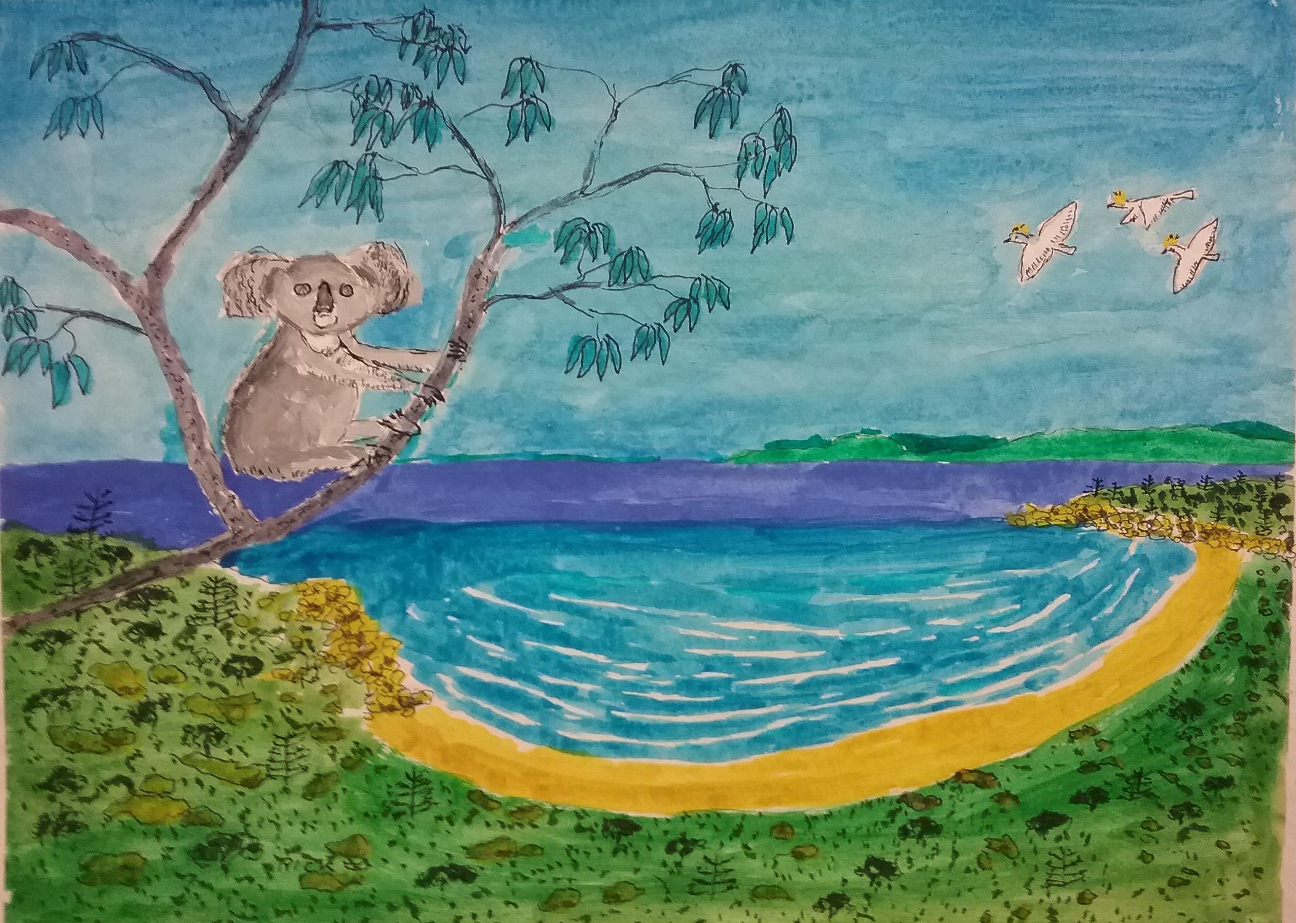 Koala in a gum tree, Magnetic Island