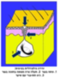 מבנה יחידה פילונידלית בסיסית