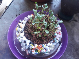 Recycle Flower pot