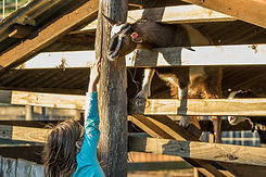People, animals and activities (47 of 47).jpg