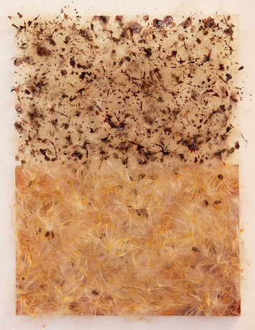 Milkweed Seeds- Chocolate Toffee, milkweed seeds, shellac on canvas, 12x9 inches, 2013