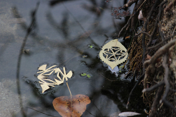 2013 #76 Leaves on Boise River